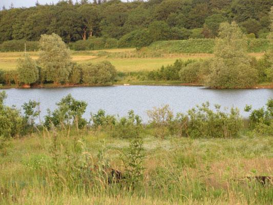 Blick auf das Biotop und grasende Galloways im eingezäunten Bereich
