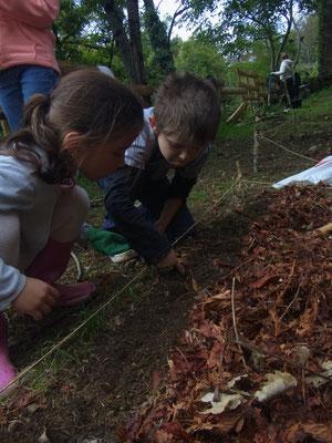 On plante des fèves et des pois!
