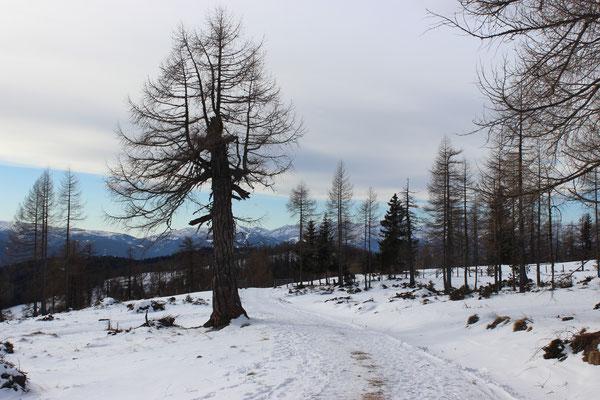 Winterwendern am wunderschönen Prebersee (Lungau)