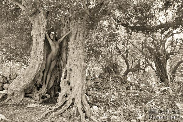 Geburt einer Waldfee (2)