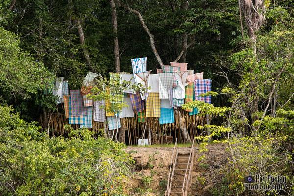 Pingpe-Jungle Trip