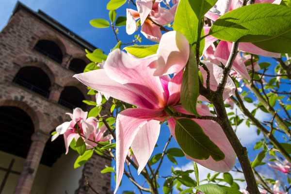 Frühling am Hexenturm