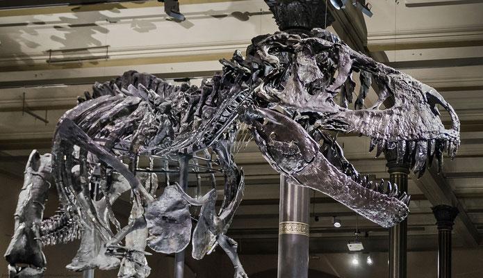 Dinosaurier-Skelett-Naturkundemuseum Berlin