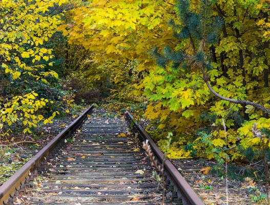 Herbstfarben über den Gleisen