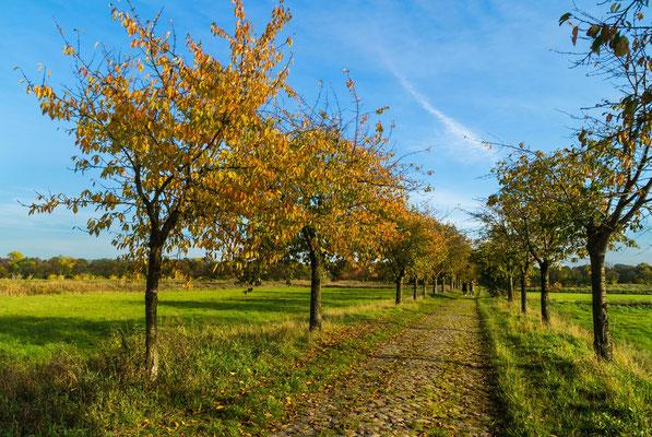 Naturlandschaft im Herbst
