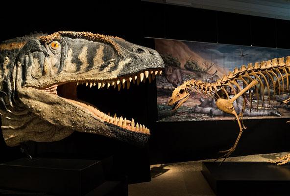Dinosaurier-Naturkundemuseum Berlin