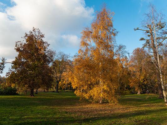 Bäume-Herbst