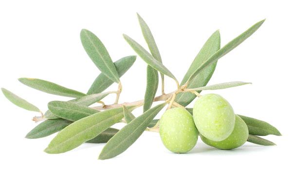 Grüne Oliven auf weißem Hintergrund