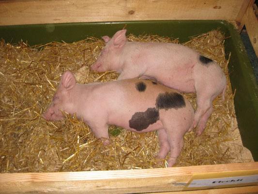 Zwei Tombolapreise schlafen friedlich