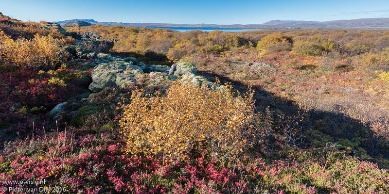 Landschap met herfstkleuren bij Þingvellir