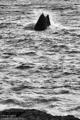 Aalscholver bij Reykjanesviti