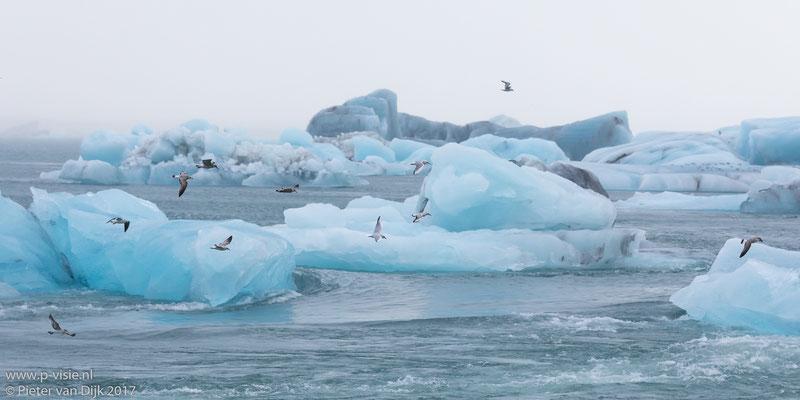 Meeuwen boven de ijsblokken