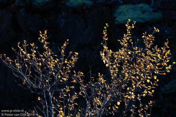 Herfstkleuren bij Þingvellir