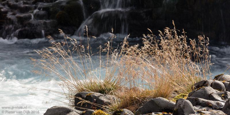 Gras in de Bruarfoss waterval