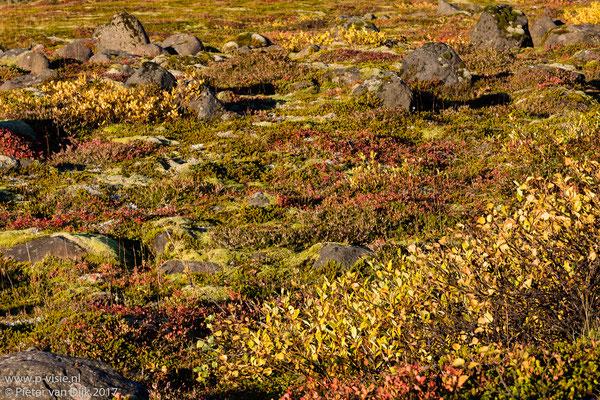 Herfstkleuren bij Virkisjökull