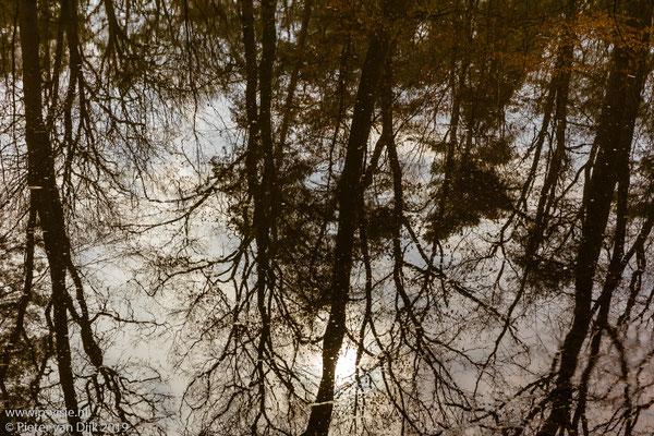 Reflectie van bomen