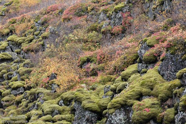 Herfstkleuren, mos en lava