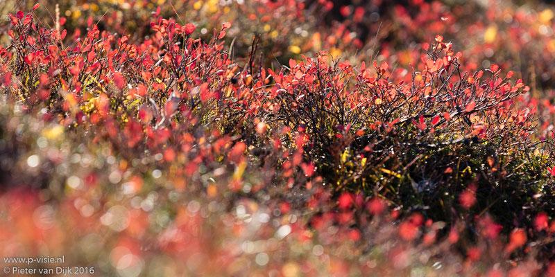 Herfstkleuren langs de Kjölurroute