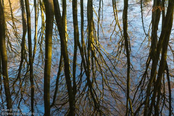 Reflectie van bomen in ochtendzon