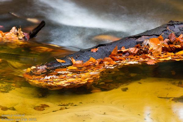 Stam met bladeren in de beek