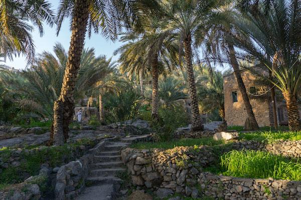 Misfah - der Lieblingsort des Sultans Qaboos. Eine idyllische Oase am Berg mit Dattelpalmen, Papaya- und Bananenbäumen.