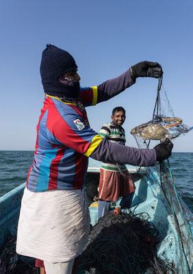 Hilal beim Krabbenfangen