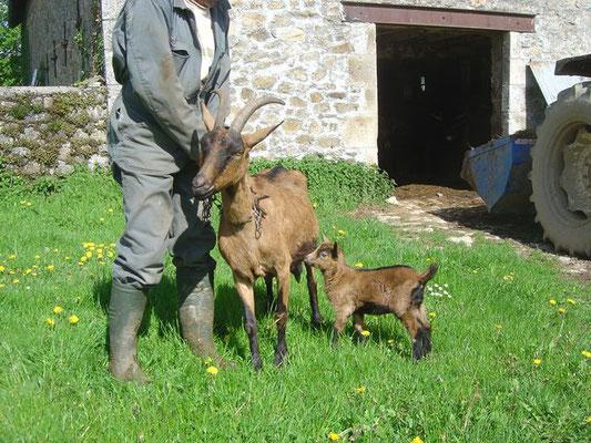 Chèvre et son petit (de mon voisin)