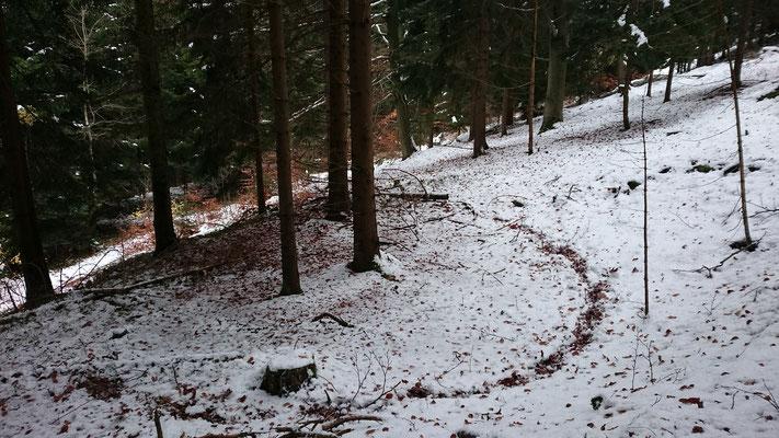 Sichtbar gemachte Kohlplatte, Rothenberg (Rabenäußig)