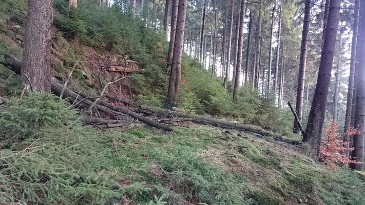 Steilhang der Brandkuppe (Steinheid)