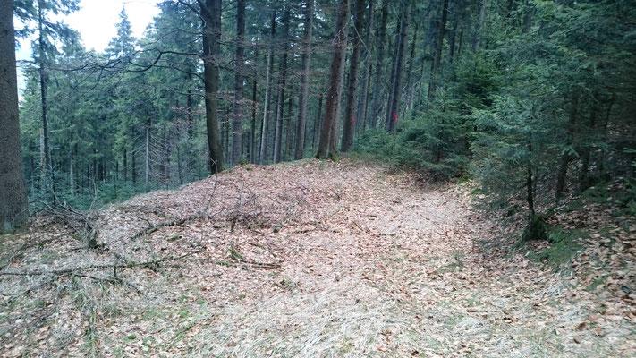 An der Grenze des Domänforstes zum Heiligenholz (Meschenbach) sind viele Meilerplätze