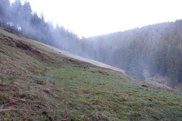 Steinbachswiese (Steinheid)