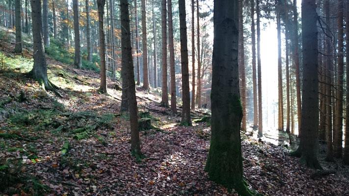Wächtersteich, Steinachtal (Lauscha/Igelshieb)