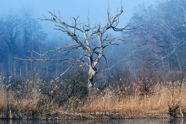 Morgennebel im Wald am See - #8021