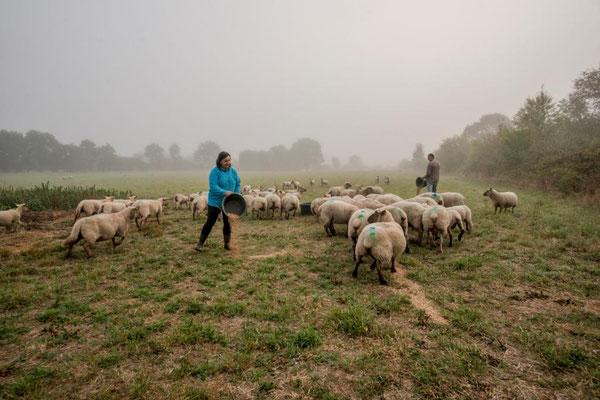 Agriculteurs et moutons © Alain Buchet - DSNE