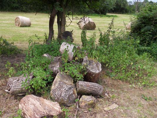 Tas de bois favorable aux reptiles et amphibiens © Alexandre Boissinot