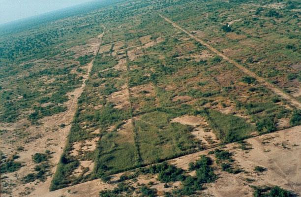 Bocage du Burkina Faso © ONG Terre Verte