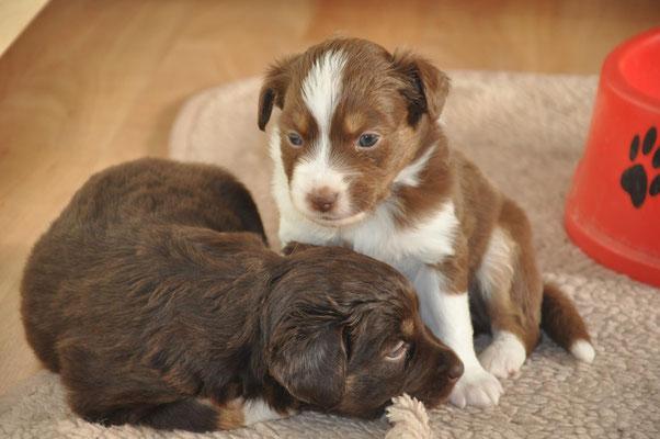 Ico mit Schwester Kira