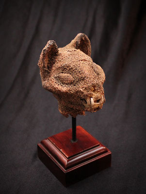 Cabeza de gato momificado egipcio (museo)