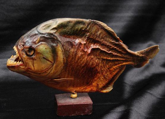 Antigua piraña (25 cm) Ancient piranha