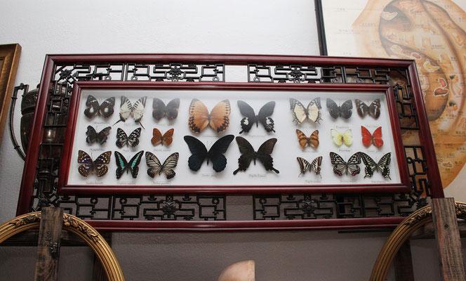Composición 22 mariposas (Gran tamaño) / Composition 22 butterflies (Large size)