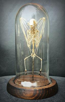 Esqueleto Murciélago / Bat Skeleton