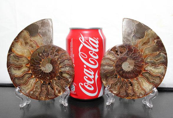 Ammonite fosil (cortado en dos caras)