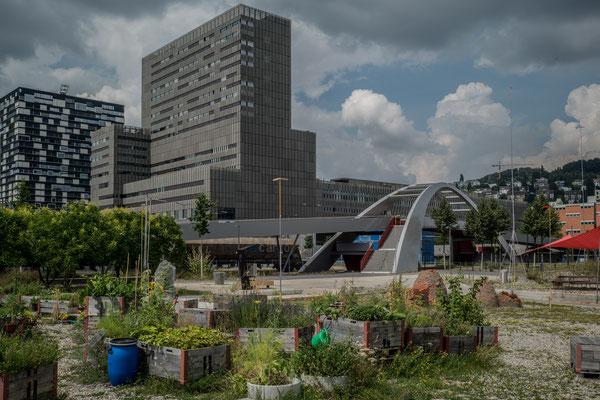 Nochmals die ZHdK, im Vordergrund angedeutete Gärten....