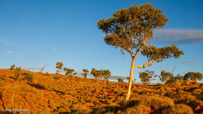 Wolfe Creek Meteoritenkrater, Western Australia