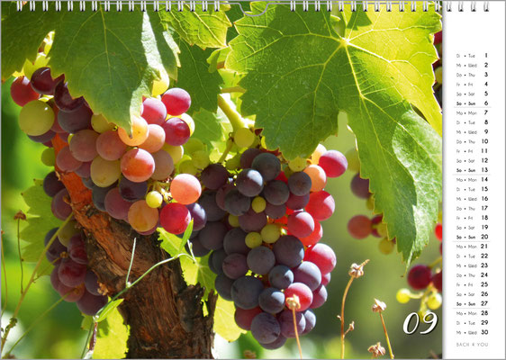 "Wine Wall Calendar, Music Calendar, Music Gift and Gift for Musicians … ""Bach 4 You""."