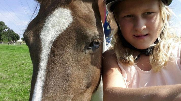 Pony und Mini