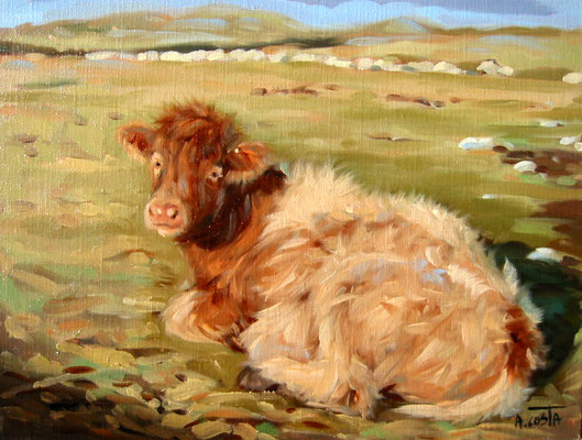 Red cow lying down