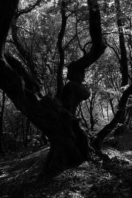 Schwarz Weiss, Natur Fotografien