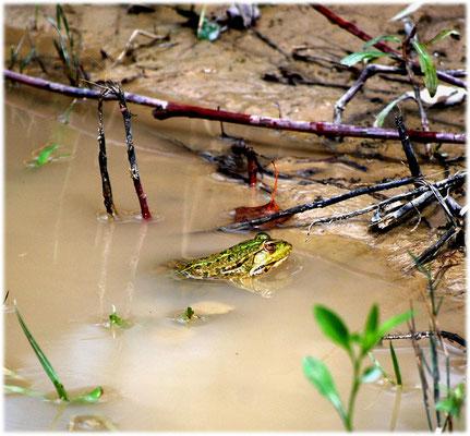 kleiner froschkönig.