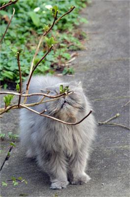 daisy liebt blümchen.